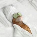 kot w spa